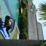 2011_0809baliday50006